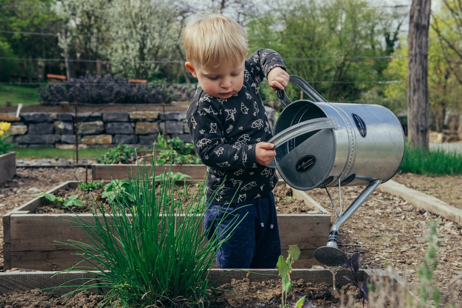toddler pouring out a watering can on plants