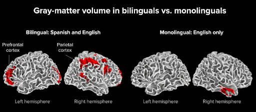 How learning a second language as a toddler can be beneficial
